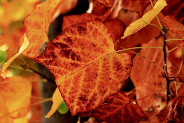 autunno 6