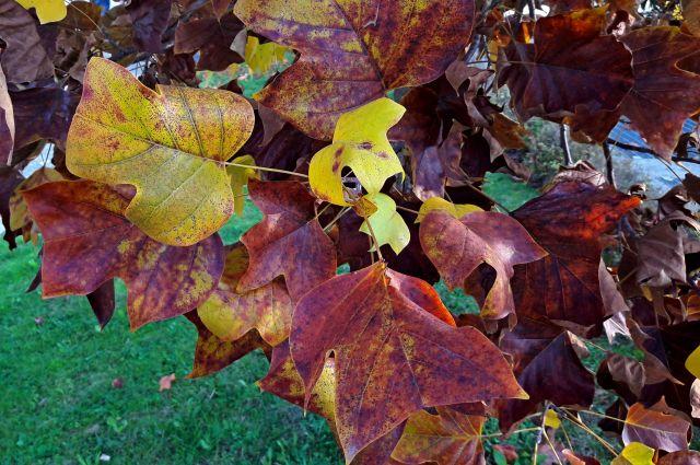 autunno 2