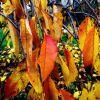 autunno 7