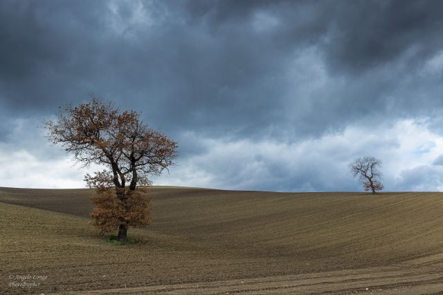 "Alberi ""sentinelle"" - autunno in Daunia."