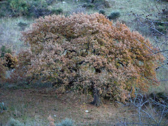 Si sta come foglie sugli alberi d'autunno