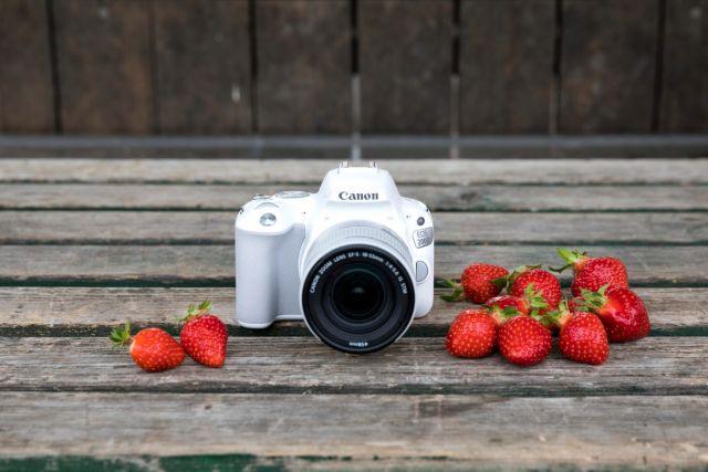 Canon EOS 200D 0019